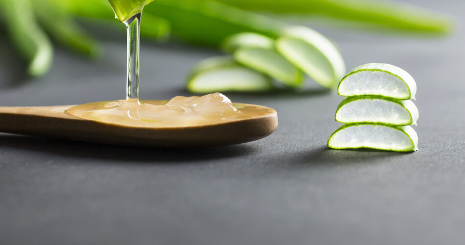 Aloe Vera gel close-up. Sliced Aloe vera plants leaf and gel with wooden spoon , natural organic cosmetic ingredients for sensitive skin, alternative medicine. Organic skin care concept