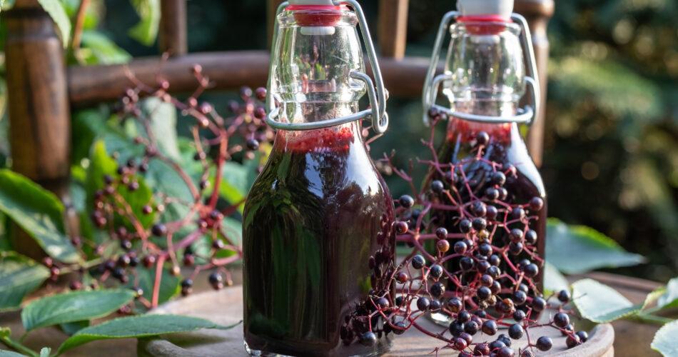Bottles of black elder syrup with fresh elderberries, outdoors
