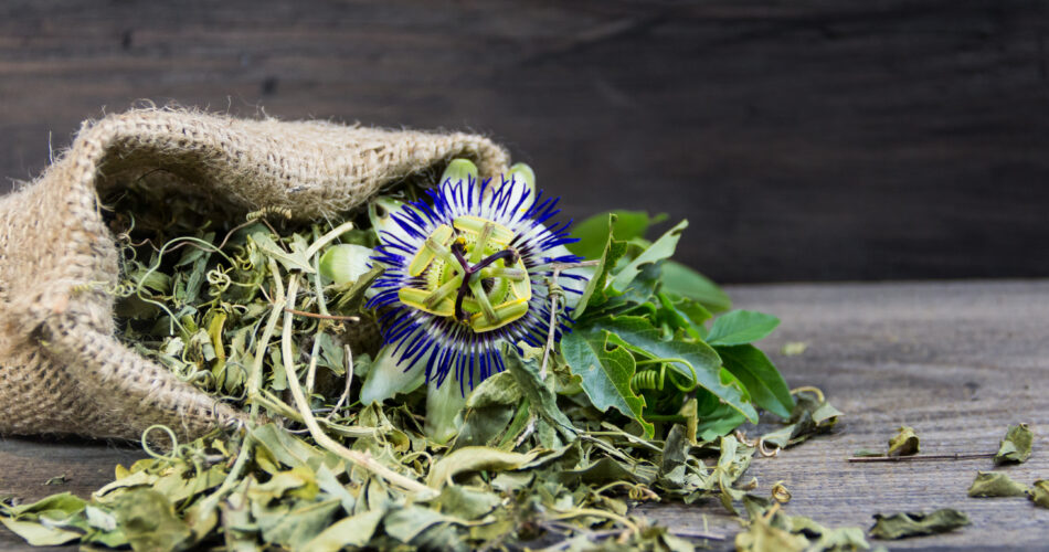 dried leaves of passiflora to drink sedative tea