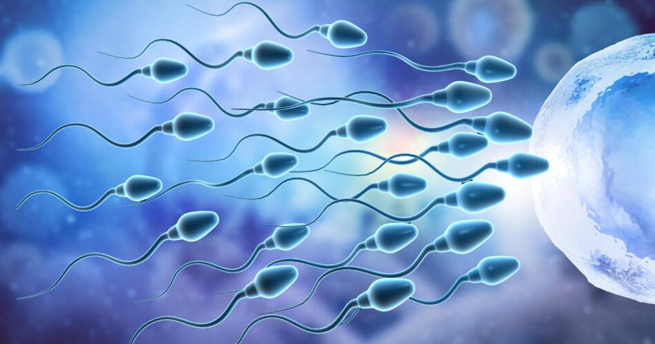 Eggs choose sperm, fertilization. 3d illustration