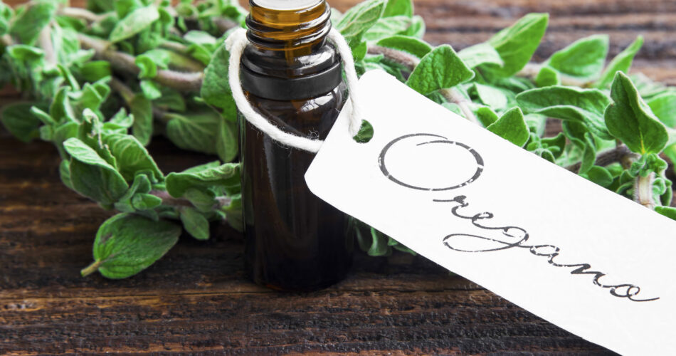 Essential oil bottle of oregano herb with fresh oregano leaves