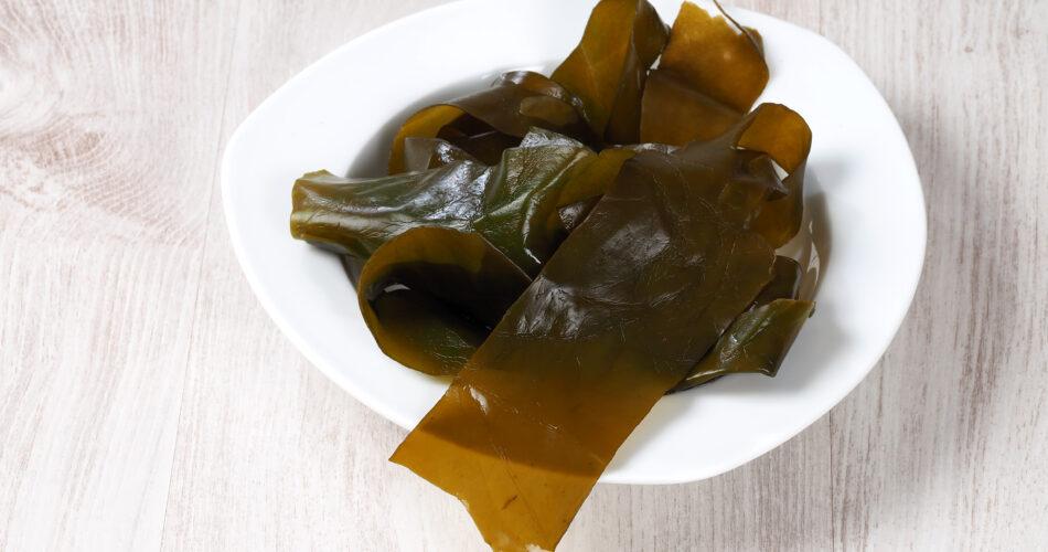 Kombu kelp is a large brown algae seaweed. Binomial name: Laminaria Ochroleuca. It is an edible seaweed used extensively in Japanese cuisine.