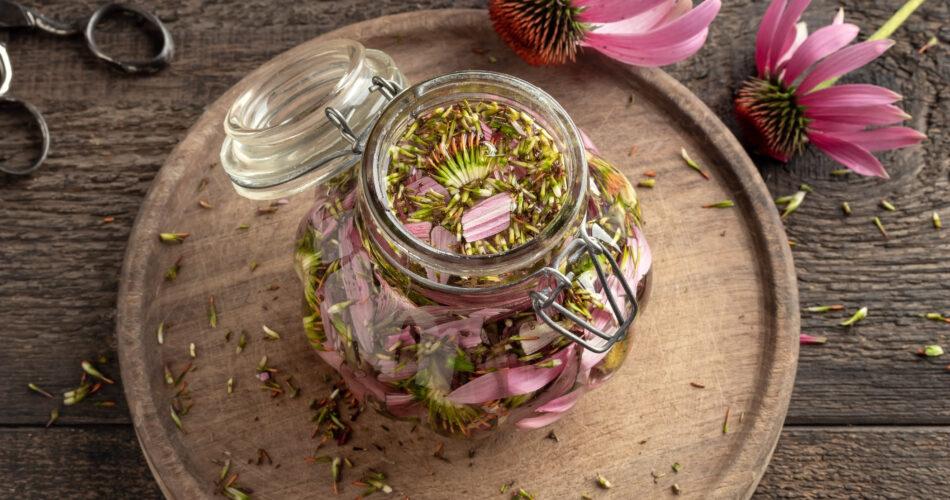Preparation of echinacea tincture in a glass jar