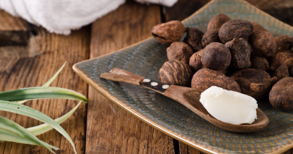 shea butter and shea nuts. Ingredients of many cosmetics