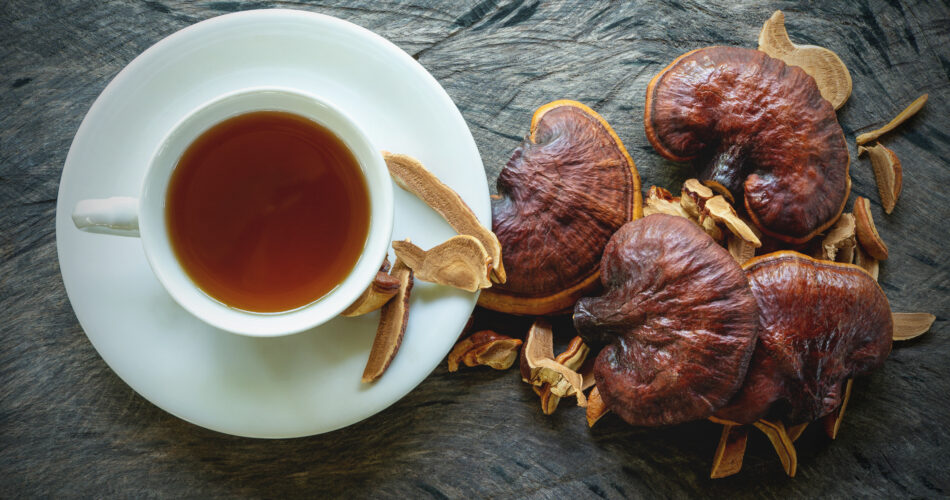 Cup of reishi tea and fresh Lingzhi mushroom with slice on dark wooden floor. (Ganoderma Lucidum). Chinese traditional medicine and nutritive value.